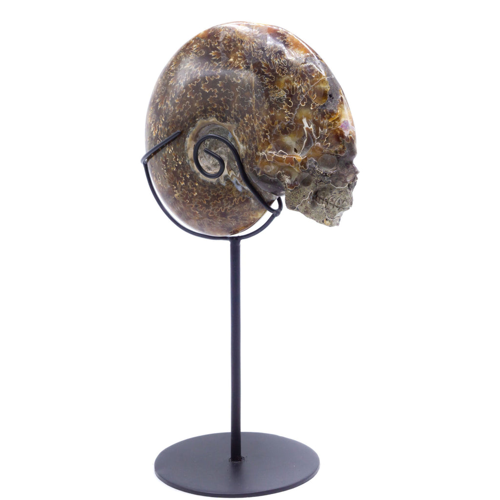 HAND CARVED AMMONITE SHELL SKULL - 6""