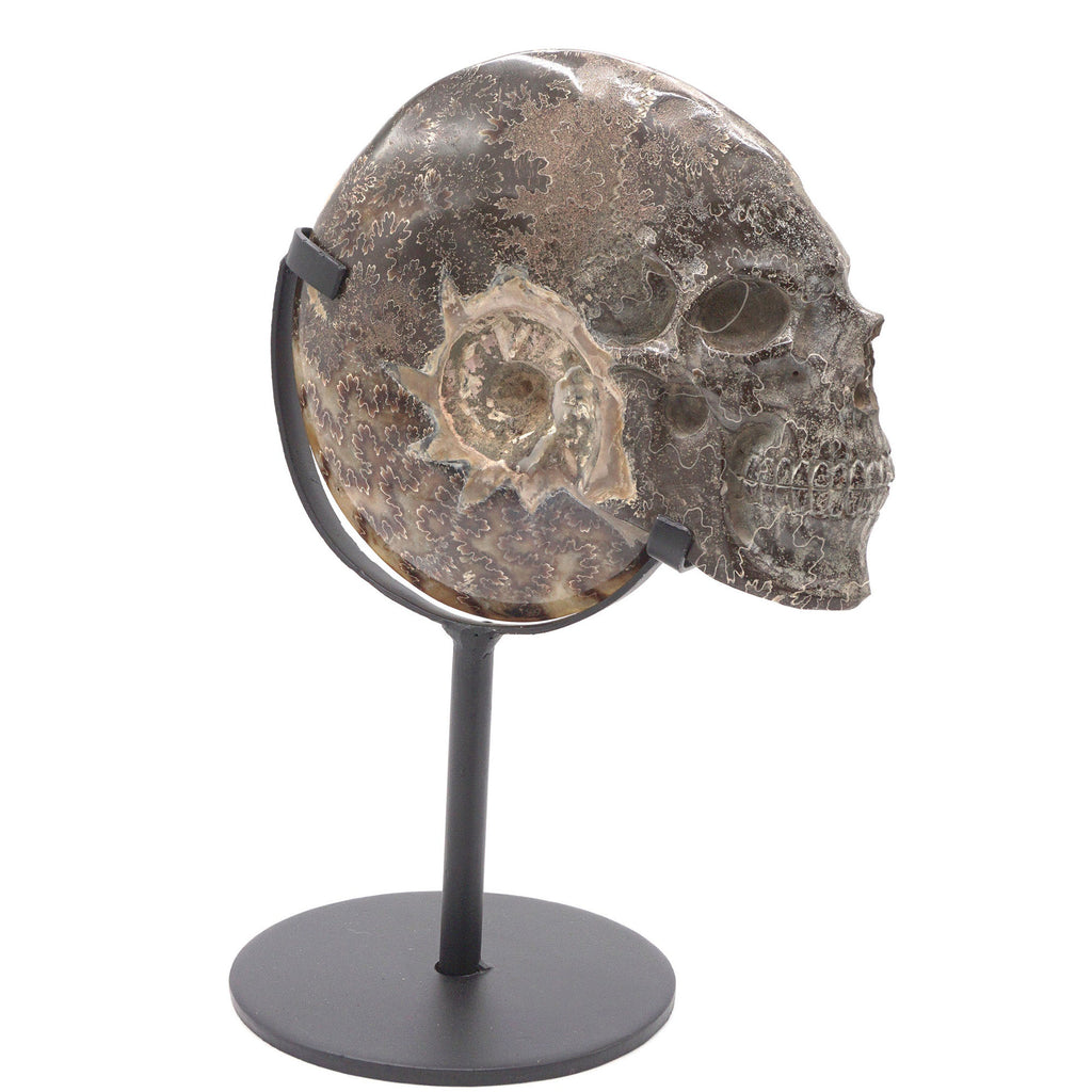 HAND CARVED AMMONITE SHELL SKULL - 7""