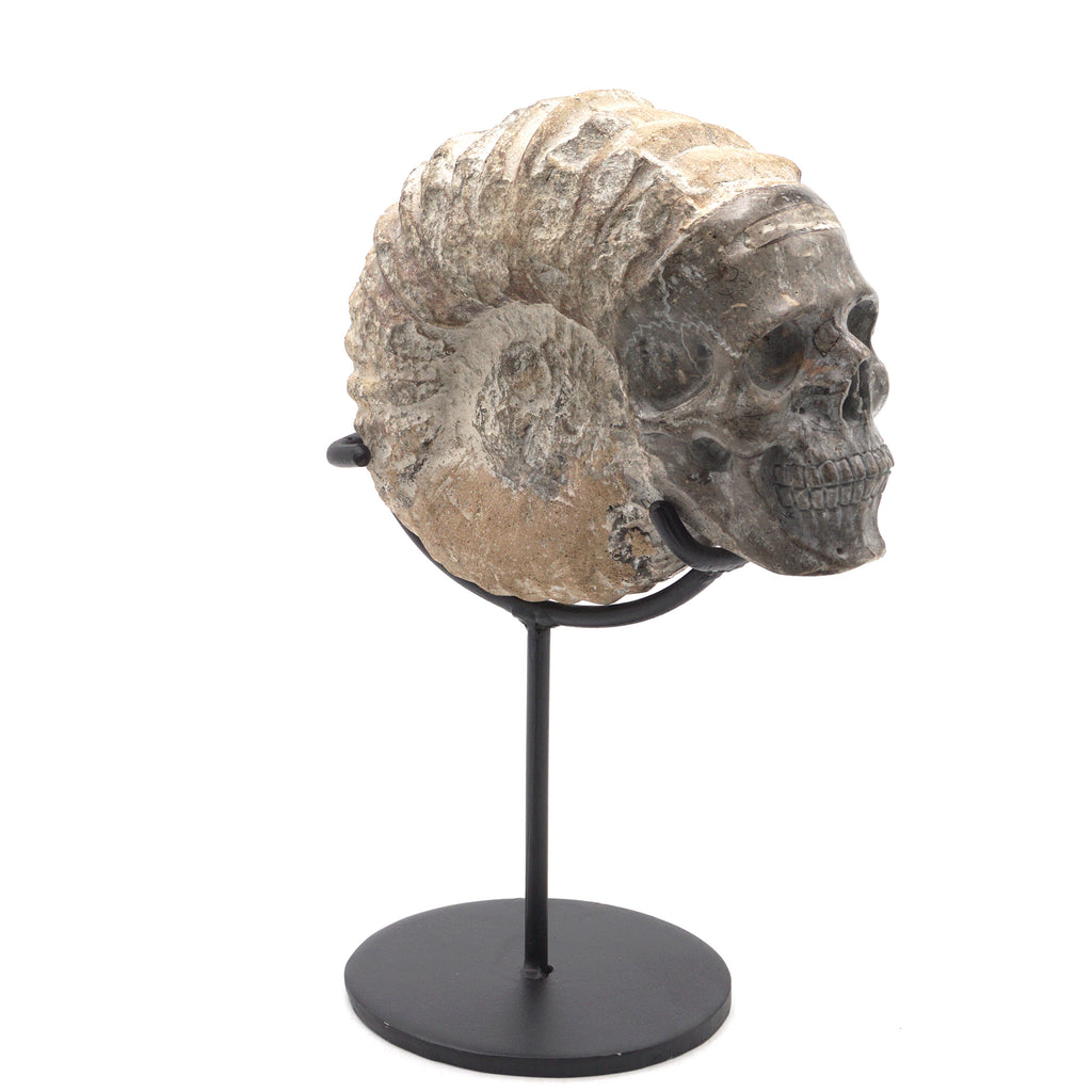AMMONITE SHELL - FOSSIL - 5""