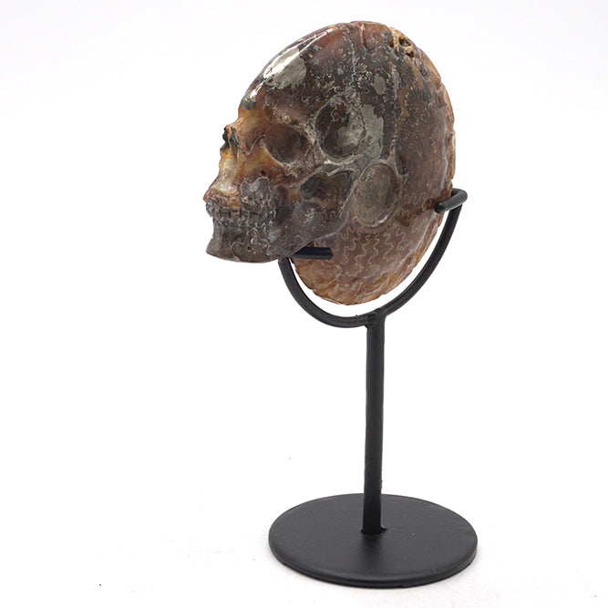 "HAND CARVED MADAGASCAR AMMONITE SHELL SKULL - 4.5"" - 'SPINE BY ME'"