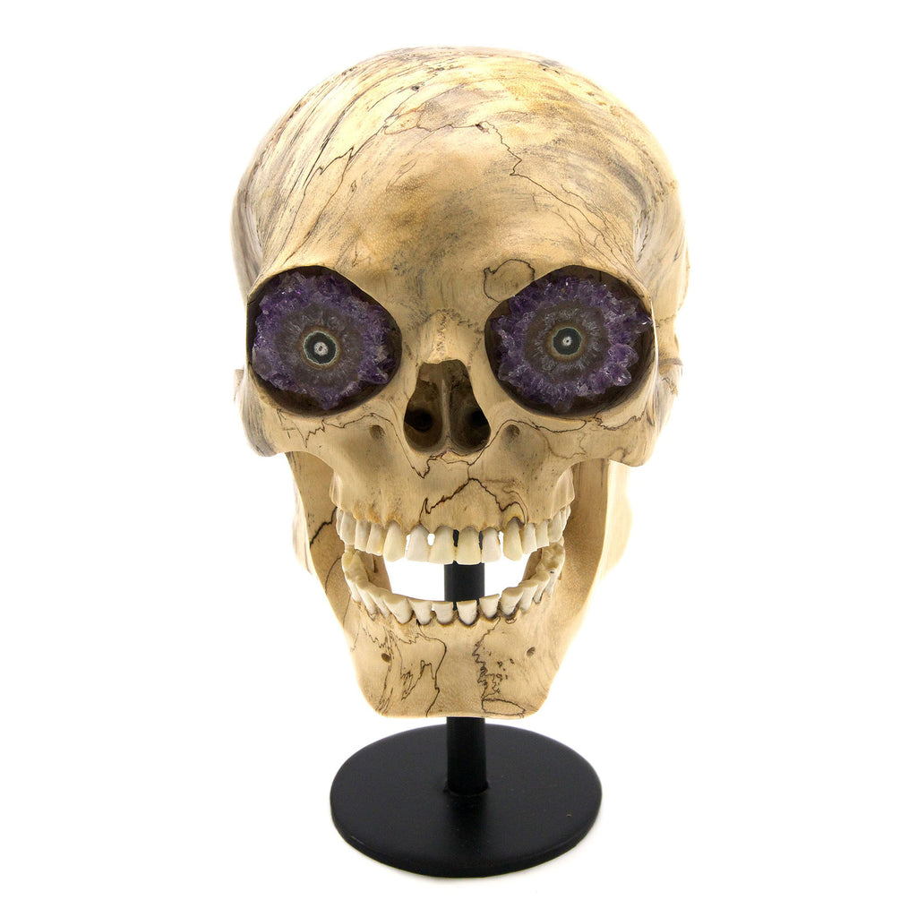 Handcarved tamarind wood and bone with Amethyst stalactite eyes large skull, with iron display..