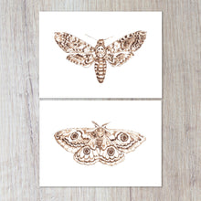 Load image into Gallery viewer, Pair of Moth Prints