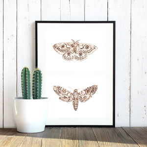 Pair of Moth Prints