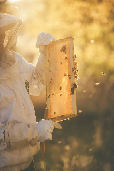 Learn Beekeeping Online