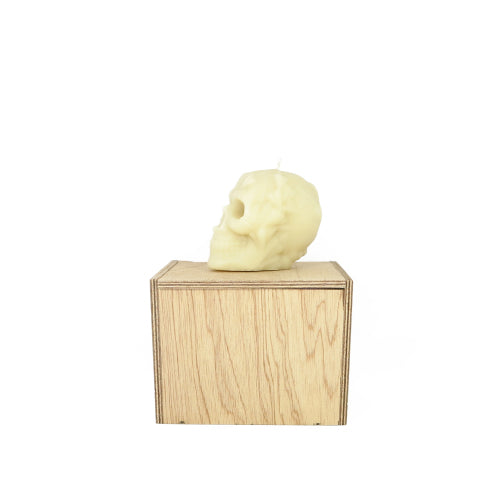 Pure beeswax skull candle on hand made wooden coffin