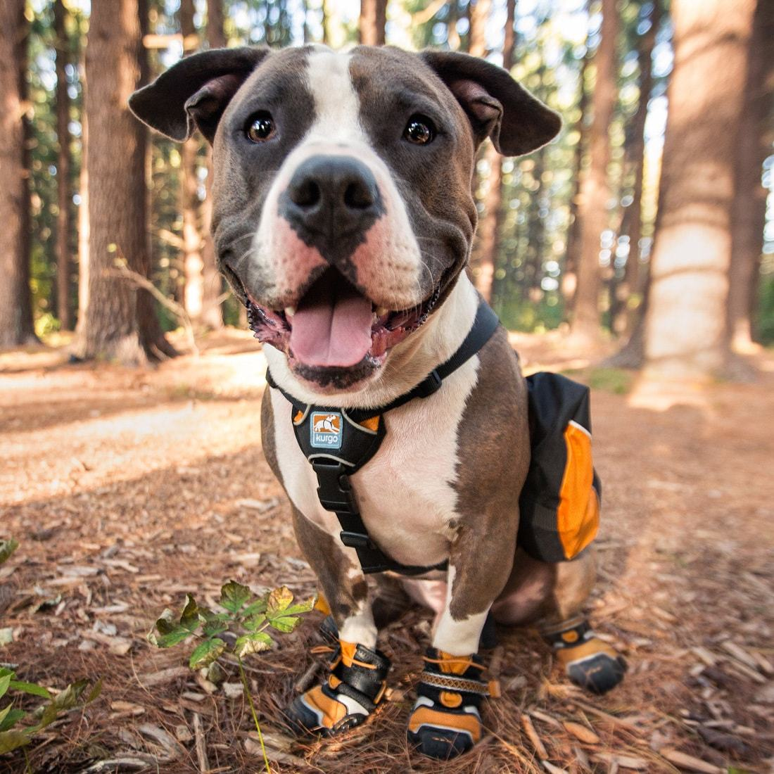 Kurgo Step and Strobe Dog Shoes/Booties - Gear For Adventure
