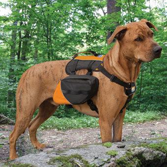 Kurgo Big Baxter Dog Pack | Large Size