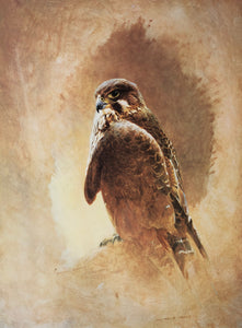 """New Zealand Falcon"" - Raymond Ching"