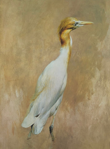 """Cattle Egret"" - Raymond Ching"