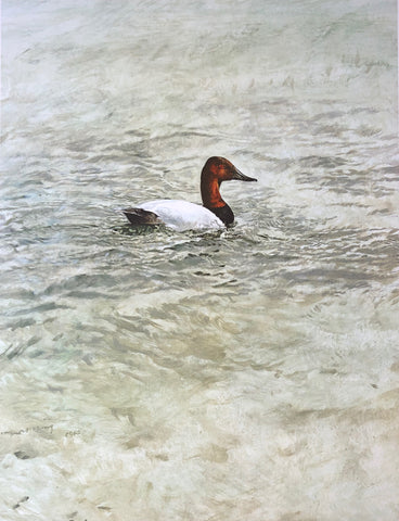 """Canvasback Duck"" - Raymond Ching"