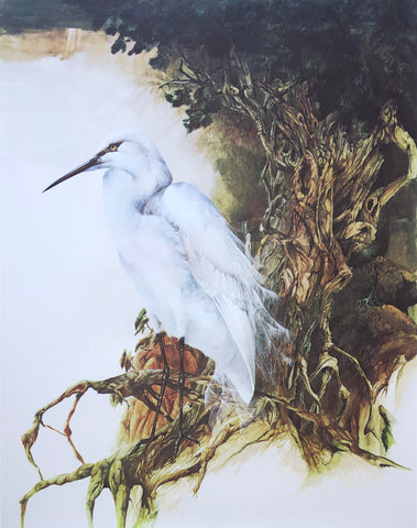 """White Heron"" - Bruce Harvey"