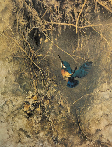 """Kingfisher"" - Raymond Ching"