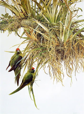 """Red Crowned Parakeets"" - Raymond Ching"