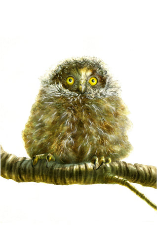 """Baby Morepork"" - Paul Coney"