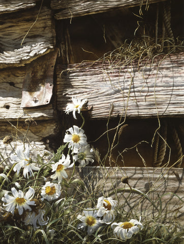 """Daisies & Boards"" - Paul Coney"