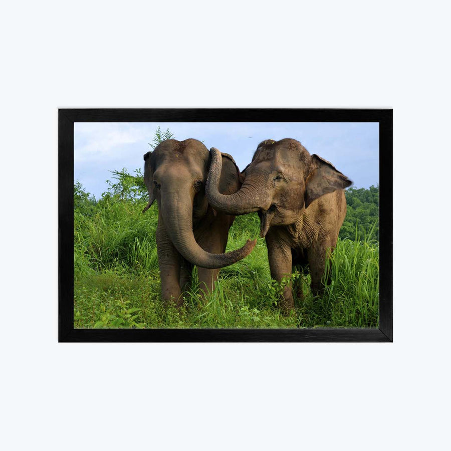 Elephant Framed Poster
