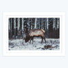 Swamp Deer Framed Photography