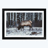 Swamp Deer Animal Framed Photography