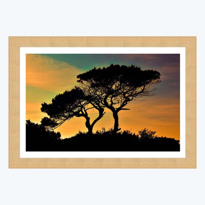 Tree Vintage Framed Photography