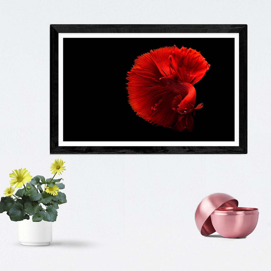 Gold Fish Framed Photography