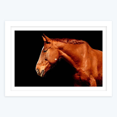 Brown Horse Framed Photography
