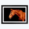 Brown Horse Animal Framed Photography