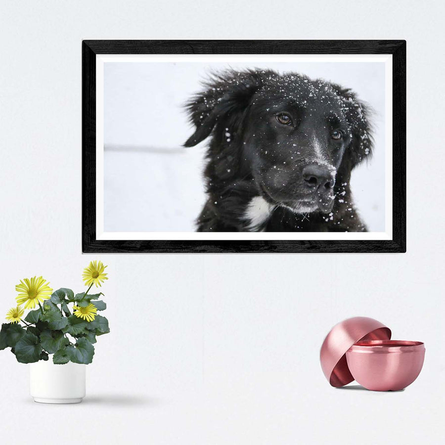 Dog Framed Photography