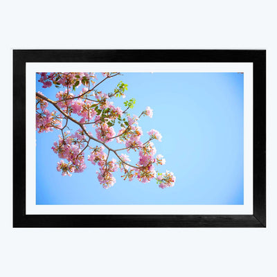 Blossoms Flower Framed Photography