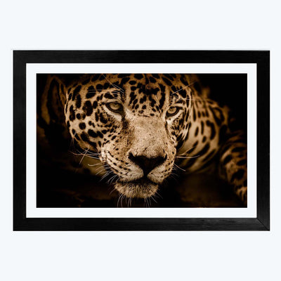 Panther Animal Framed Photography