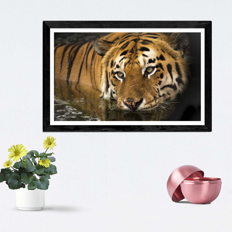 Lion Framed Photography