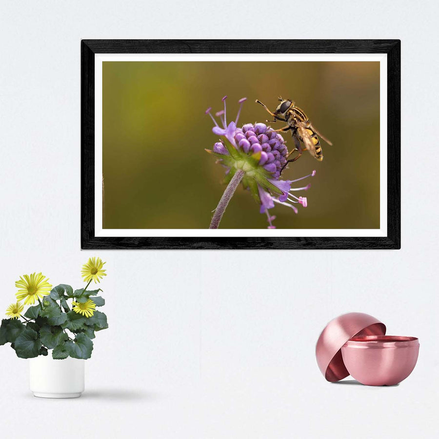 Closeup Framed Photography