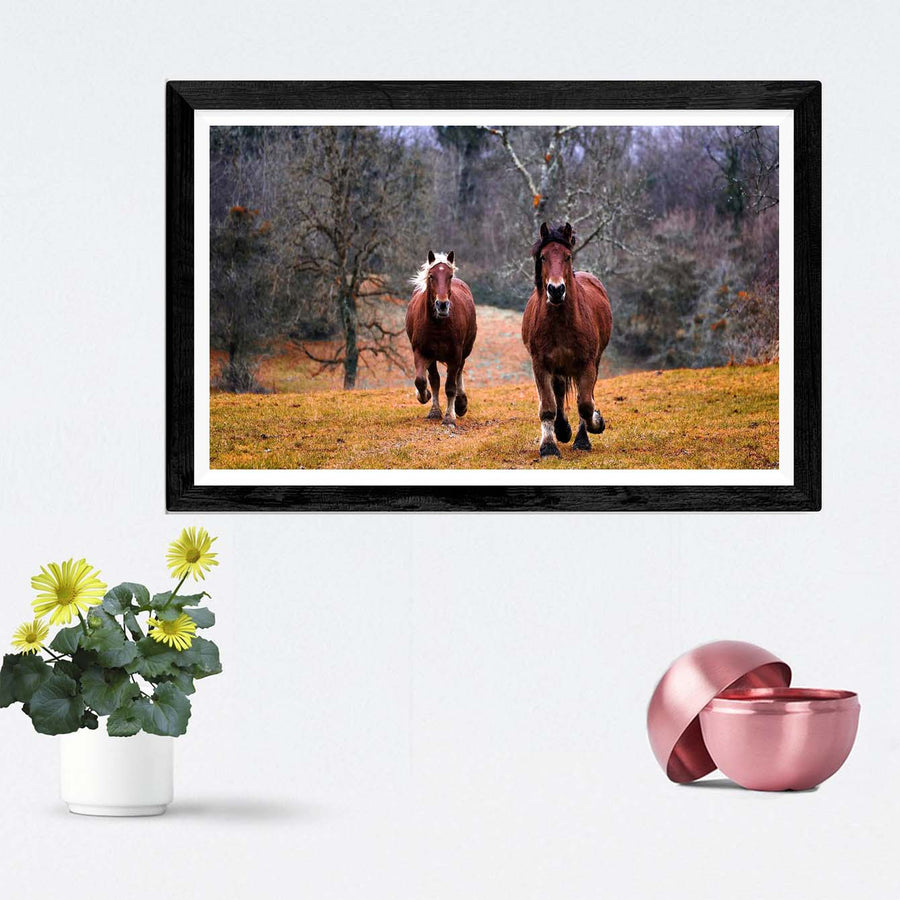 Running Horse Framed Photography