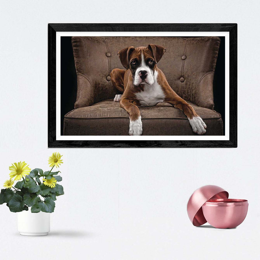 Boss Dog Framed Photography