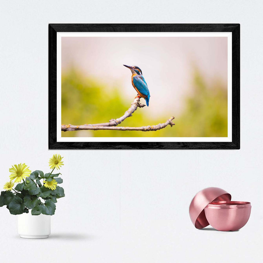 Kingfisher Bird Framed Photography