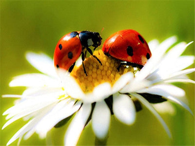 Ladybugs And Nature
