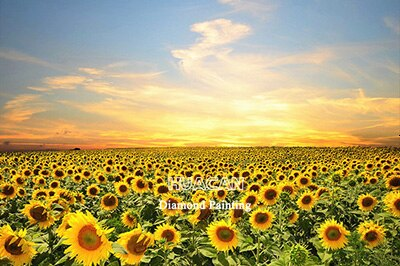 Sunflower Fields Scenery