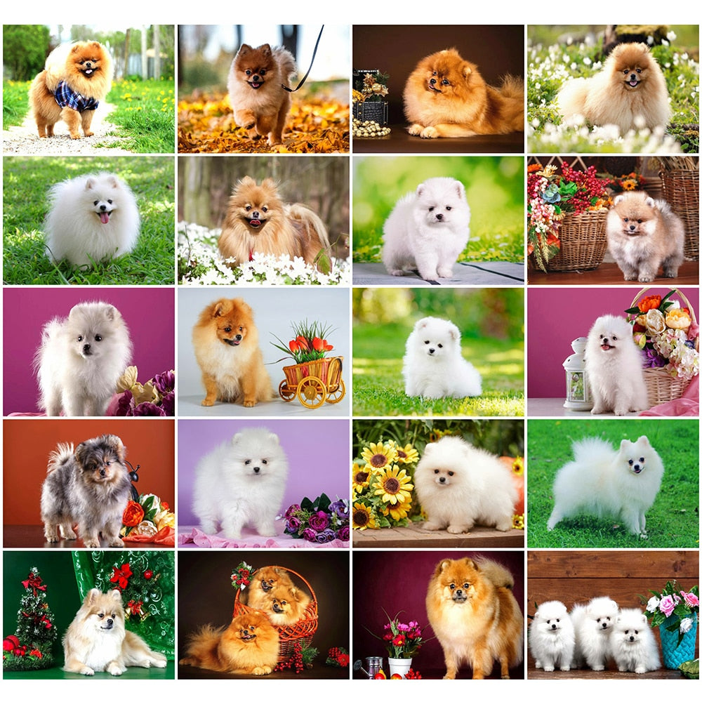 Fluffy Dogs Collage