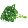 Parsley Curly