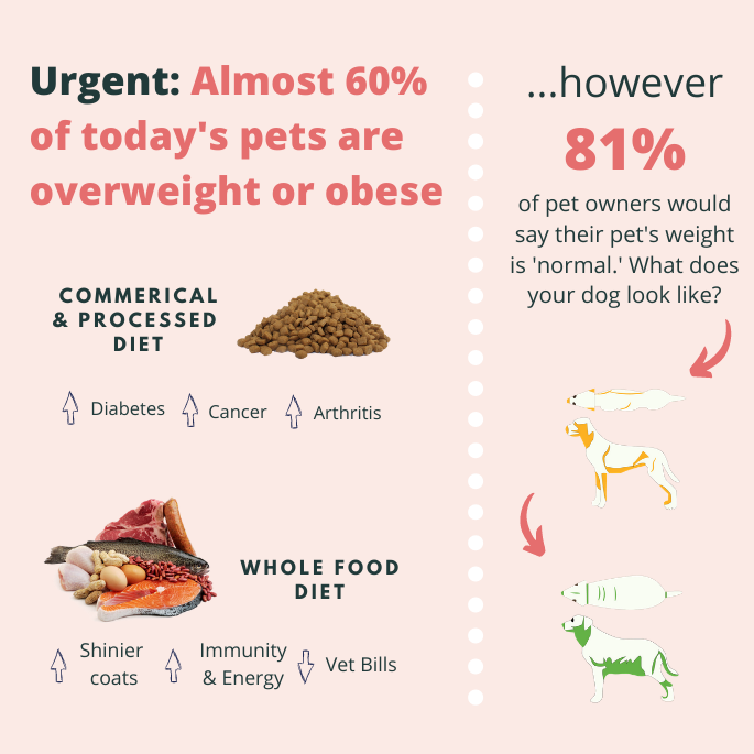 Obesity in Dogs: A Massive Health Threat