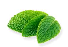 Peppermint Satva