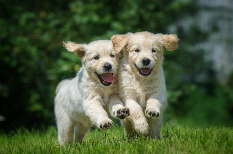 Puppies can be big bundles of energy, so be ready for all that fun before getting one.