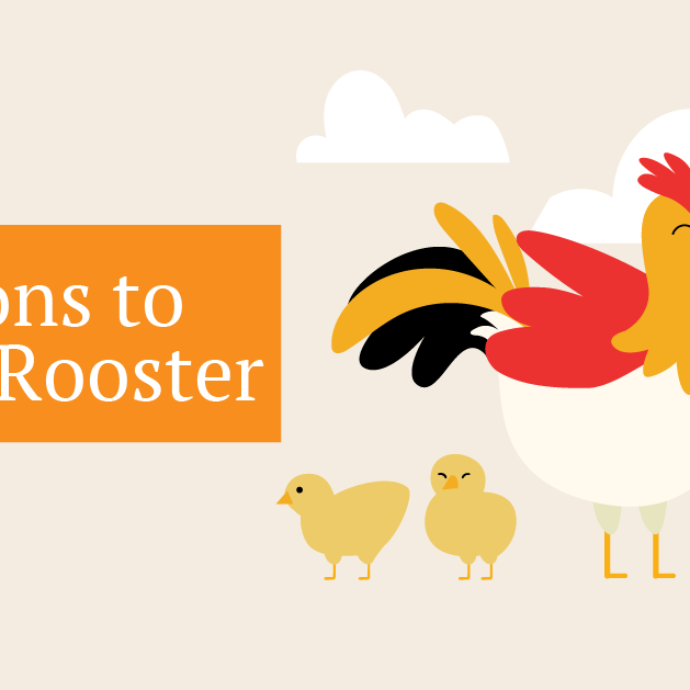 Is a pet rooster right for you? Here are 7 reasons to keep a rooster.