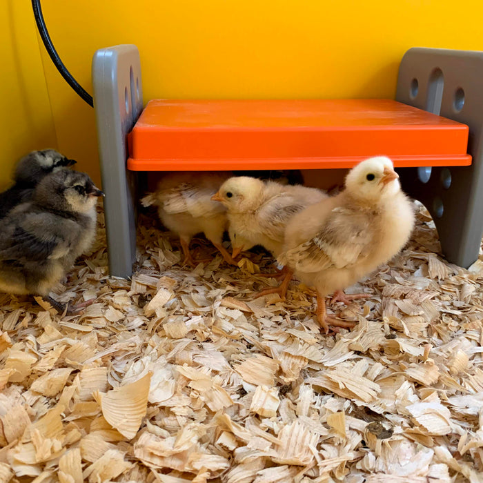 Your chicks need to stay warm, so if you're looking for an alternative to a heat lamp, here are some helpful solutions.