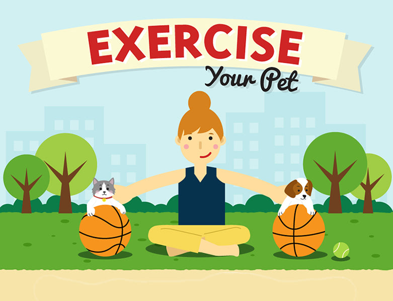 Exercise your Pet: Simple Solutions & Easy Answers