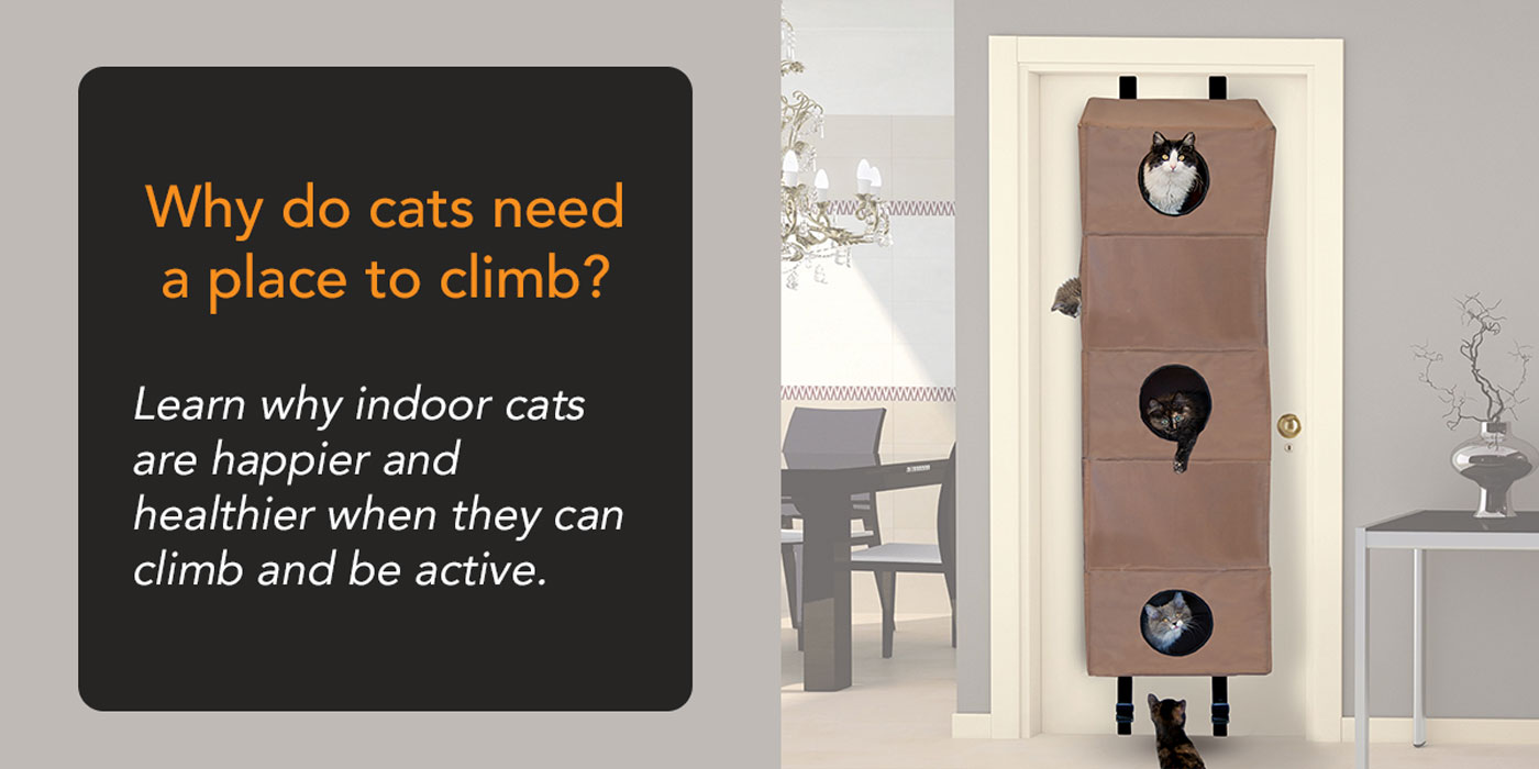 Why Cats Need a Place to Climb