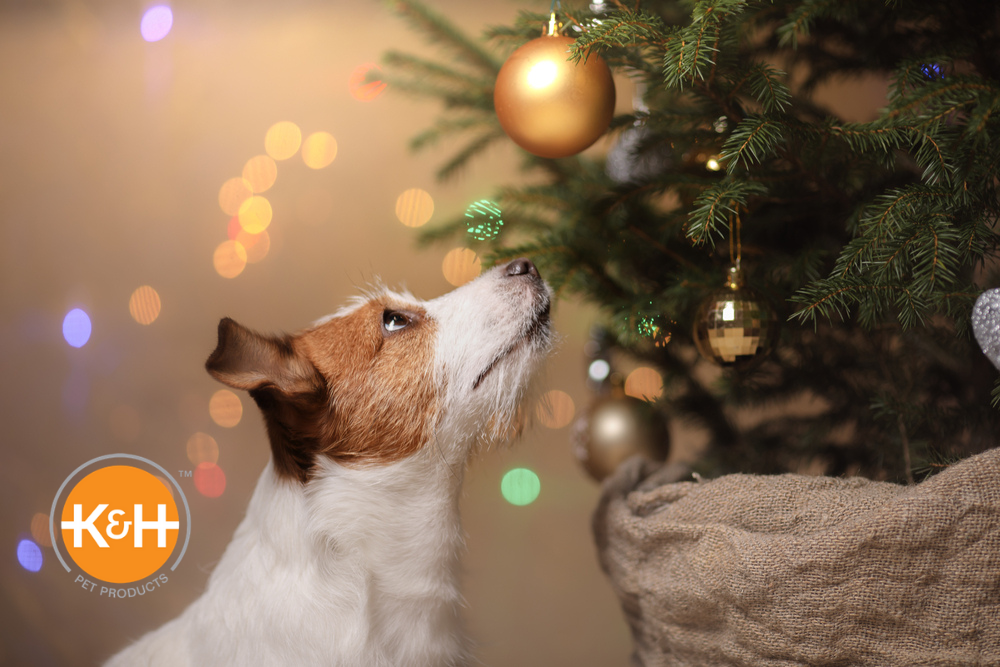 A curious dog can get into a lot of trouble when it comes to Christmas trees. Dog proof your tree to keep him safe.