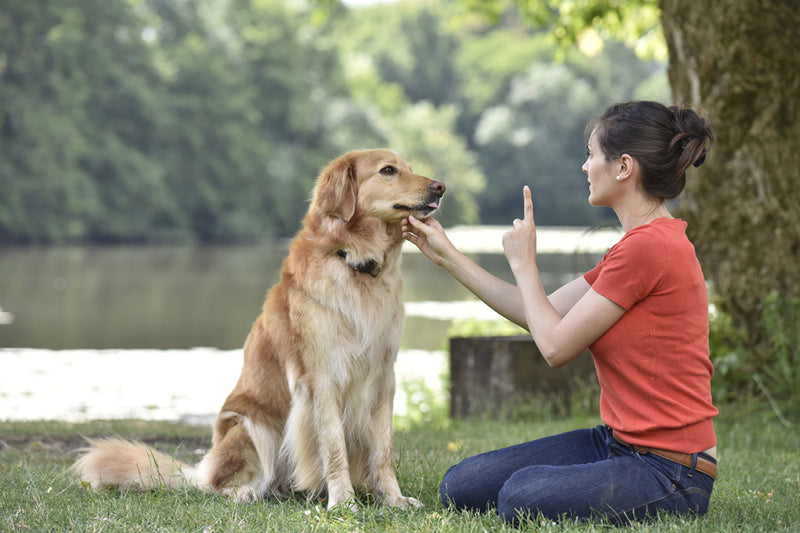 Yes, you can teach an old dog new tricks—it's never too late. Here are some tips that can help.