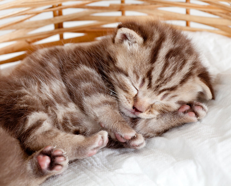 Your new kitten sleeps a lot, and that's okay.
