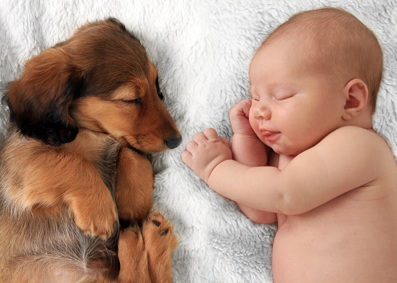 A puppy sleeps peacefully with a newborn baby. Good training can help them get along well.