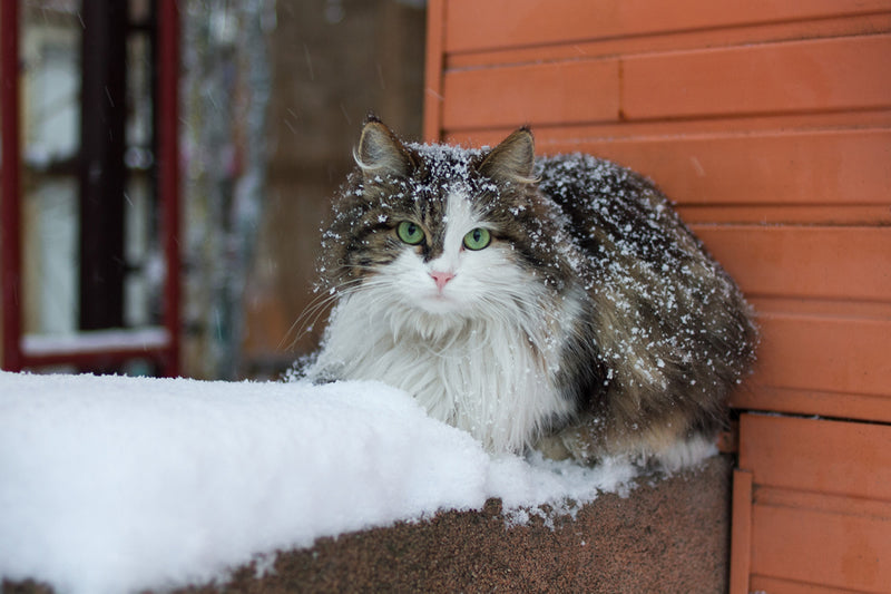 How to Keep a Cat Warm Outside in the Winter